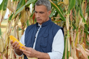 More Farmers File Suit Against Syngenta for MIR 162 GMO Corn Trait Release